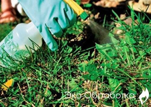как избавиться от травы