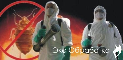 Обработка от клопов. Уничтожение клопов в квартире в Москве.