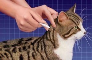 предотвращение блох у животных
