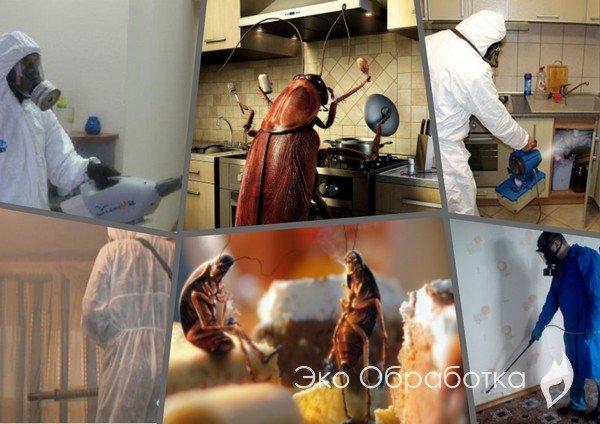 профессиональная дезинфекция от тараканов в Москве