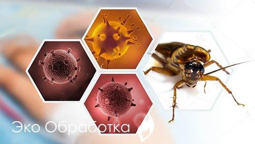 болезни, передаваемые тараканами