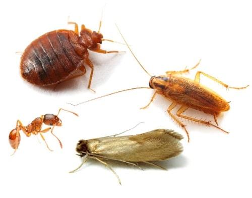 борьба с насекомыми сэс