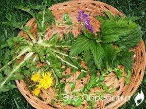 сорняки в корзине