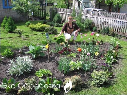 садовый участок без сорняков