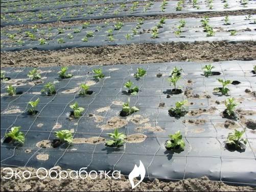 как избавиться от сорняка гербицидами