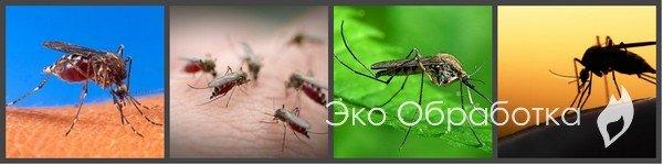 Как избавиться от комаров в квартире или доме