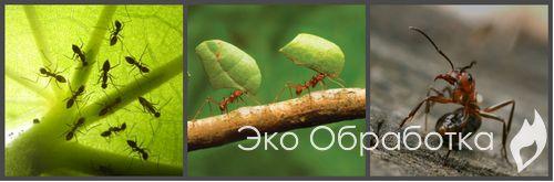 как вести борьбу с муравьями