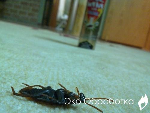 воздействие на паразитов ядохимикатами быстрого действия