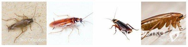 Как избавиться от тараканов в квартире. Избавление от тараканов.