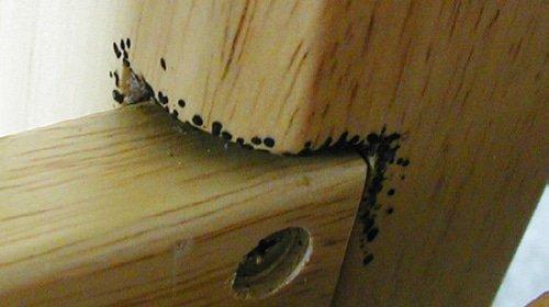 черные точки от тараканов