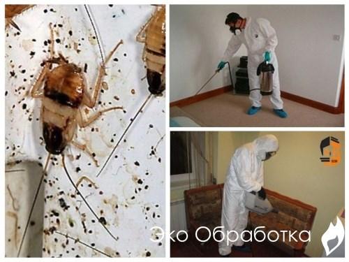профессиональная помощь в избавление от тараканов в квартире