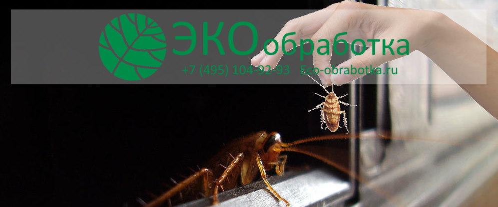 откуда берутся и как избавиться от тараканов в квартире навсегда