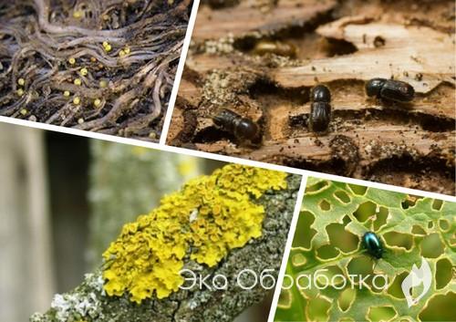 насекомые на деревьях