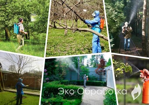 обработка леса специалистами
