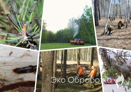 вредители в лесу