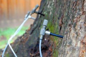 инъекции дереву от короеда
