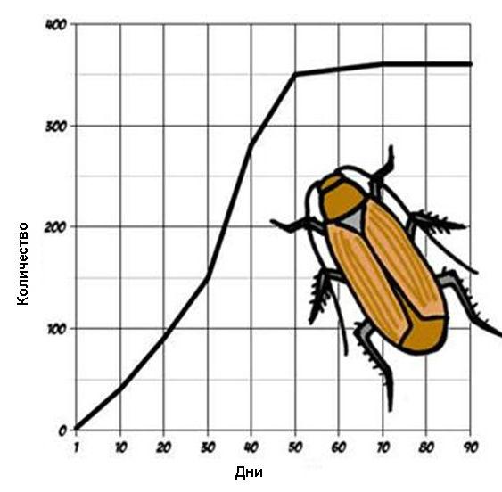 график размножения тараканов