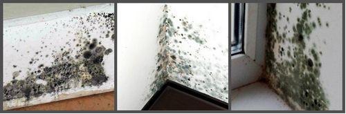 обработка поверхности стен от плесени