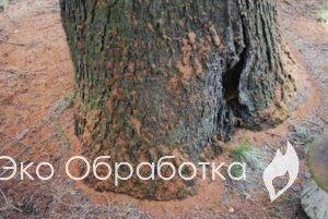 мелкая древесная труха после короеда