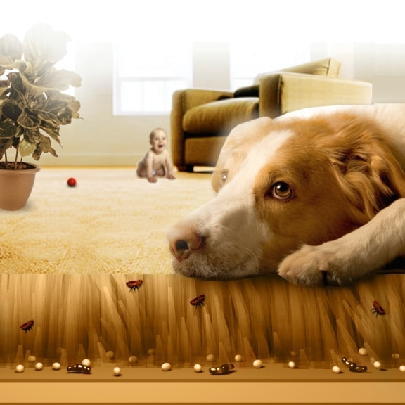 how to remove pet urine odor from house