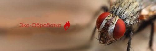 заказать услугу по обработке от мух в службе дезинсекции Эко-Обработка
