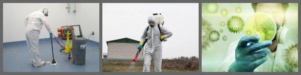 дезинфекция бактерий и плесени