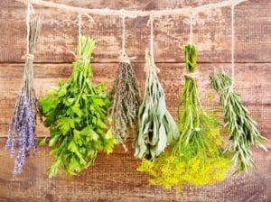 Пахучие травы от мух