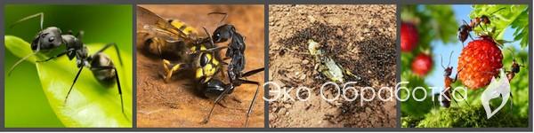 профилактика муравьев