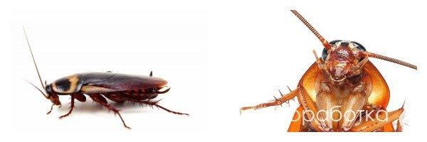 Травля тараканов в Москве. Потравить тараканов в квартире.
