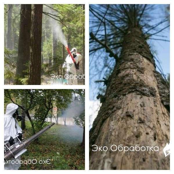 борьба с короедом на деревьях