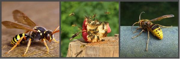 уничтожение осиных гнезд