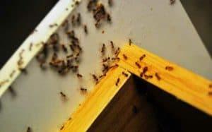профилактика муравьвев