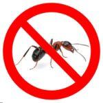 профессиональная обработка от муравьев