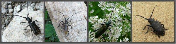 меры против жука
